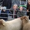 Schafe werden zwar nicht auf dem WiC-Frühlingsfest erwartet. Aber dafür wird es jede Menge anderer Attraktionen geben, die ein Lächeln in Kinder-Gesichter zaubern werden.